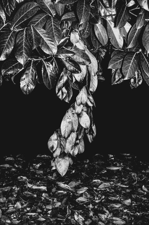 leaves black and white photography with high contrast and flash by francesco merlini
