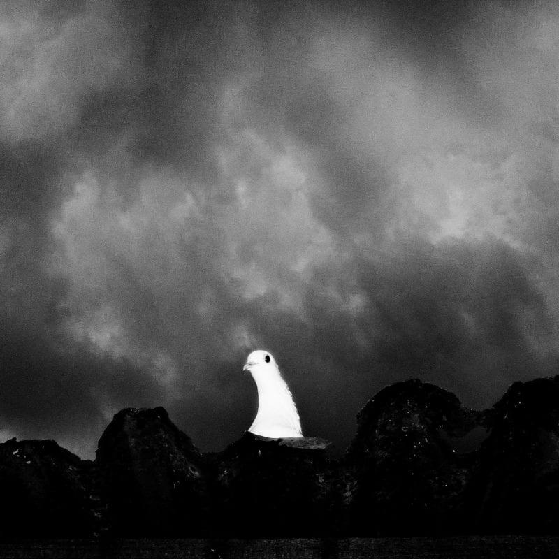 black & white,Aji Susanto Anom的对比摄影