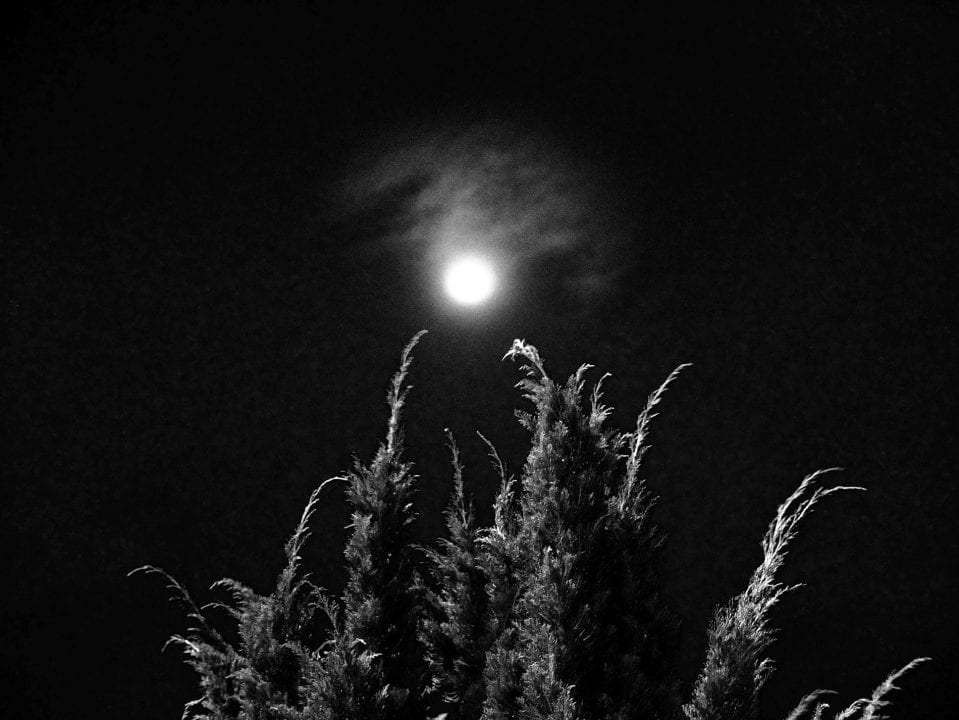 tree at night black & white, contrast photography by Aji Susanto Anom