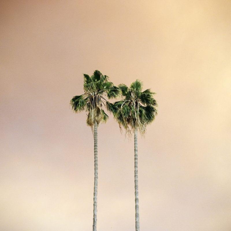 在城市或工业环境中生长的树木,sinziana velicescu的彩色摄影