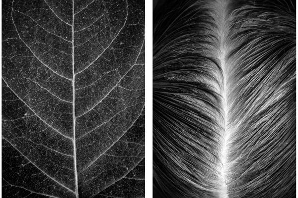 Black and white photograph of the human body and nature by Alicja Brodowicz. Visual Exercises: A Series of Diptychs