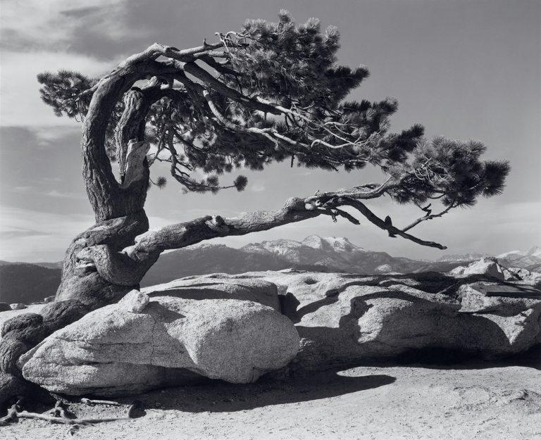 Geschichte der Landschaftsfotografie Jeffrey Pine Sentinel Dome Yosemite von Ansel Adams
