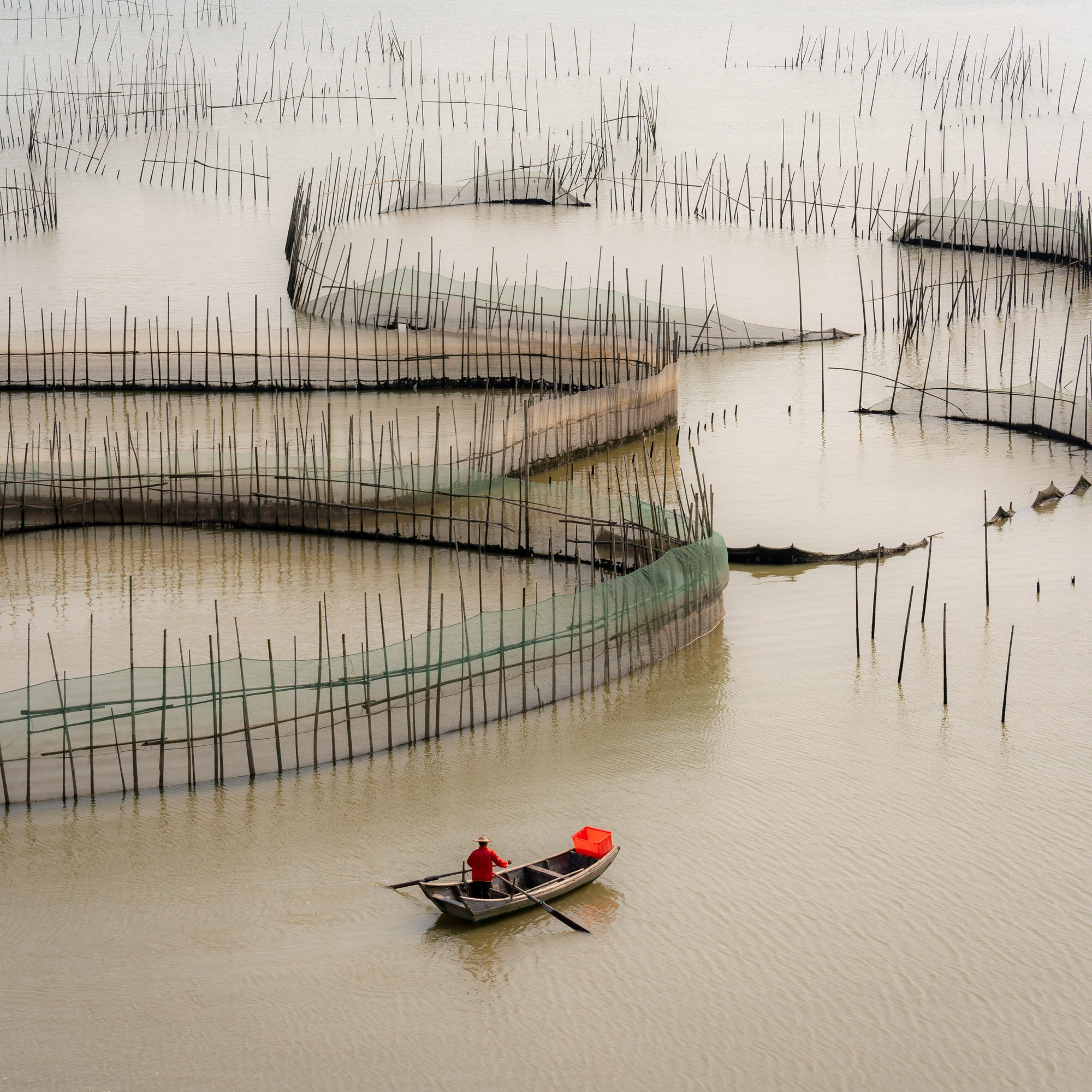 A fisherman entering the maze of fishing cages