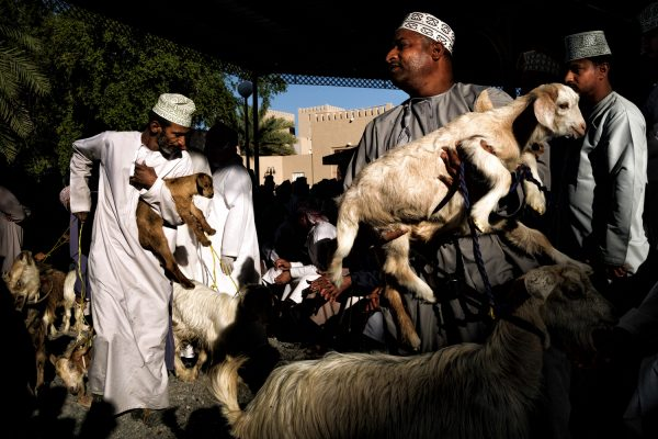 Aste di capre a Nizwa, Oman, fotografie a colori di Maude Bardet