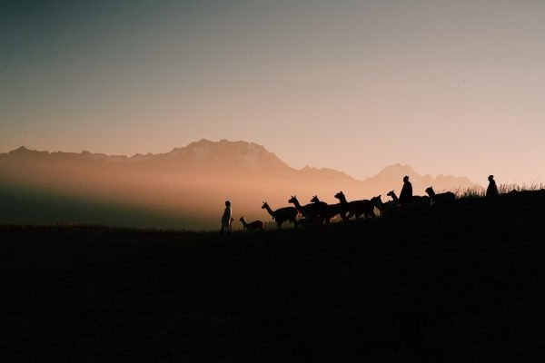 Color travel photography by Pia Riverola, Cusco, Peru, Sunset, Andes, Lamas