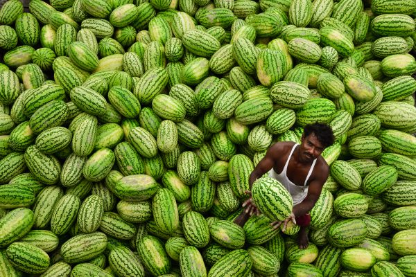 photograph of a a fruit seller working on top of a water melon pile in the streets of Dhaka, Bangladesh