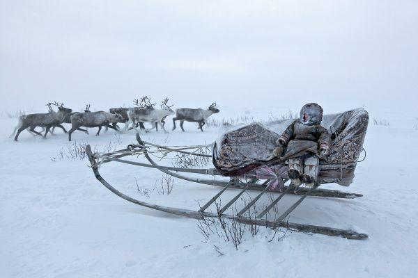 亚美尼亚半岛的涅涅特儿童和驯鹿的彩色照片,亚历山德罗·马拉古提(Alessandro Malaguti)