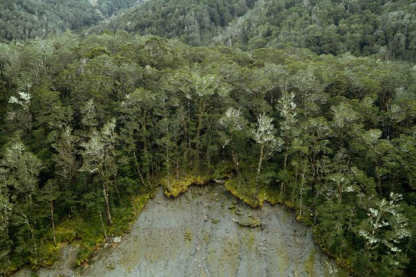 lanscape Farbfoto eines Waldes von Louise Coghill