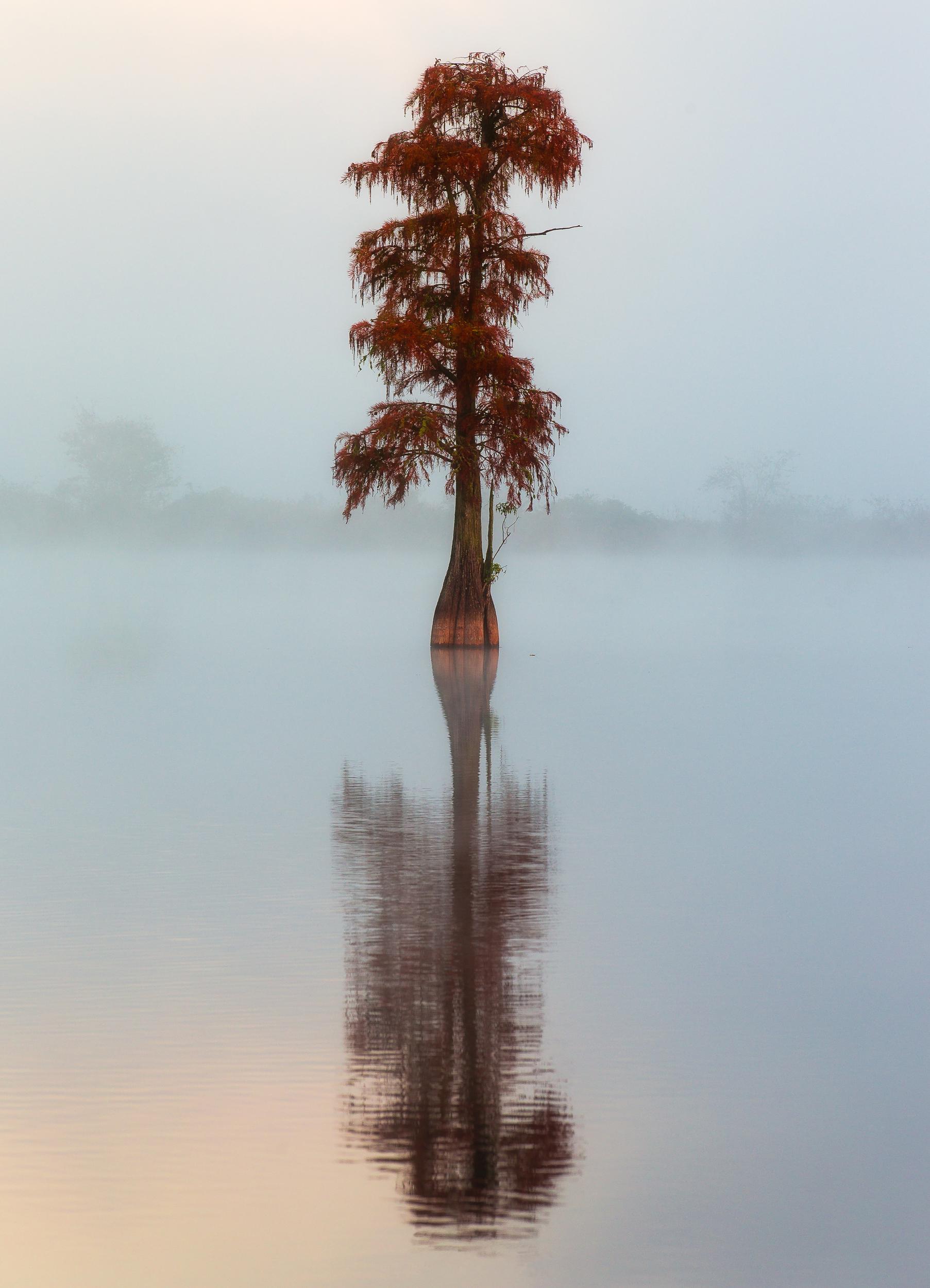 fotografia paesaggistica a colori di un albero in acqua in florida di Alex Armitage