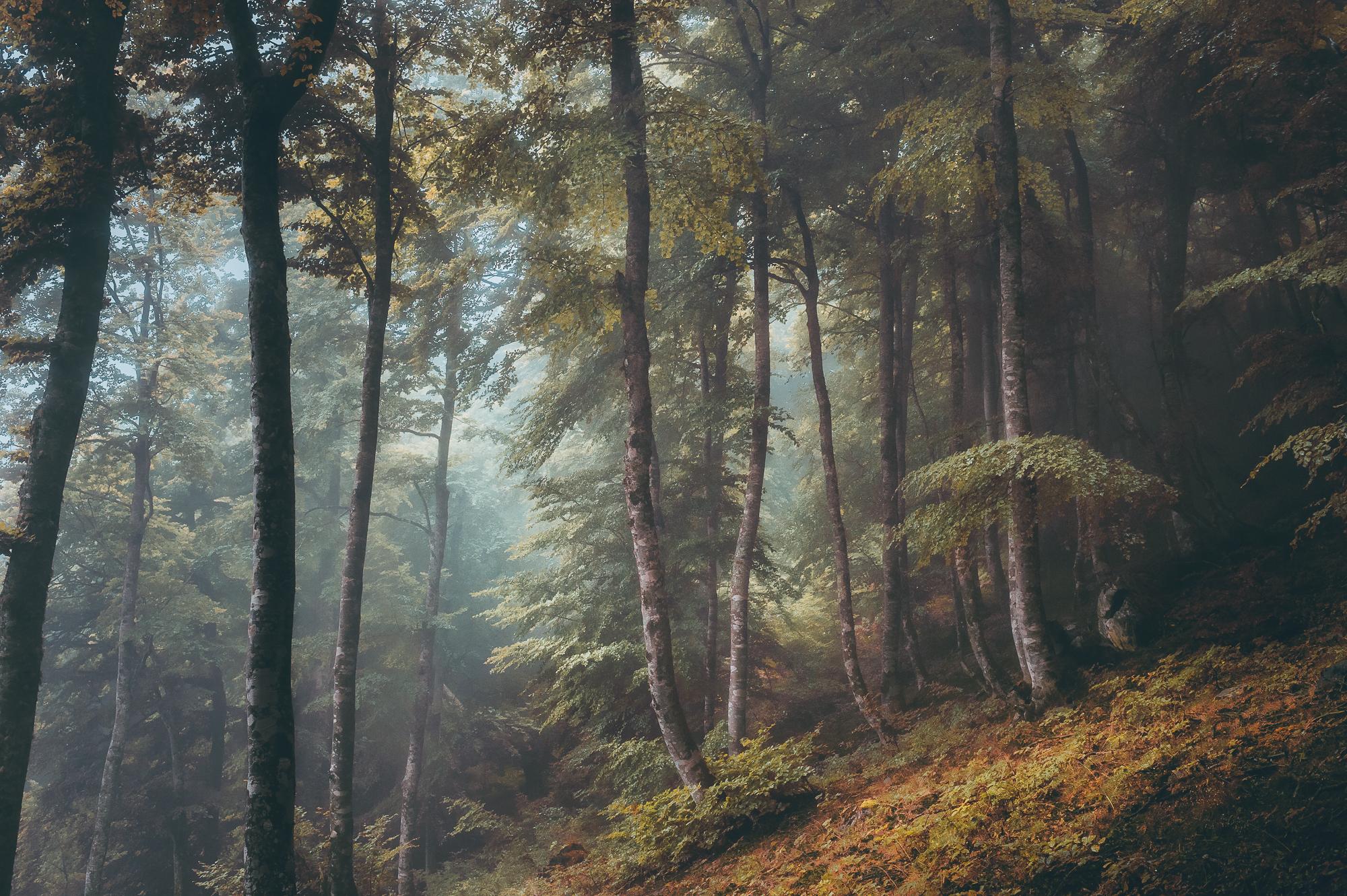 fotografia paesaggistica a colori di una foresta nei Pirenei, Francia, di Yohan Terraza