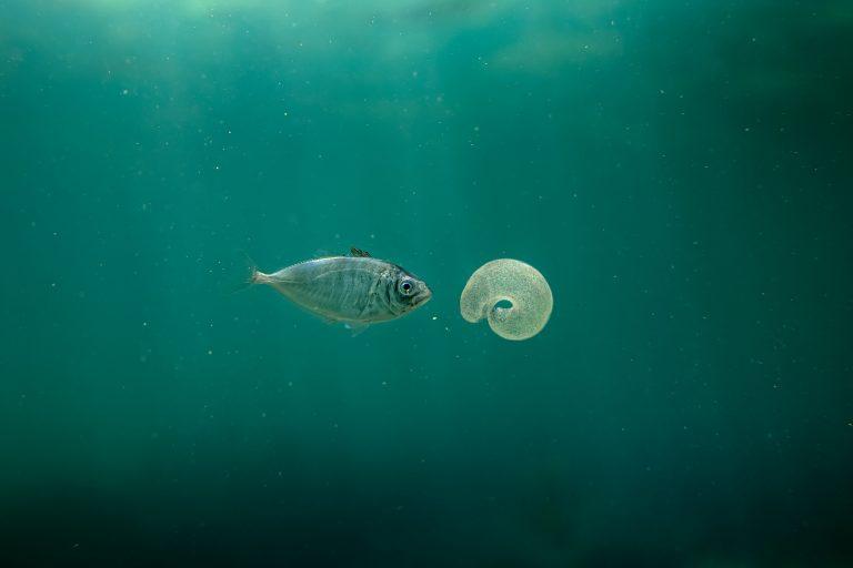 Fotografía submarina en color de Matthew Bagley. Peces y medusas, océano, bellas artes, marinas.