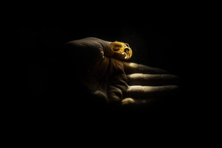 Fotografía submarina en color de Matthew Bagley. Pequeño pulpo, mano, océano, oscuridad, bellas artes, bajo el agua.