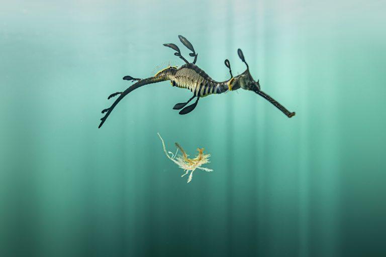 La belleza del mundo submarino - Fotografía submarina en color de Matthew Bagley. Caballo De Mar, Algas, Océano, Marina