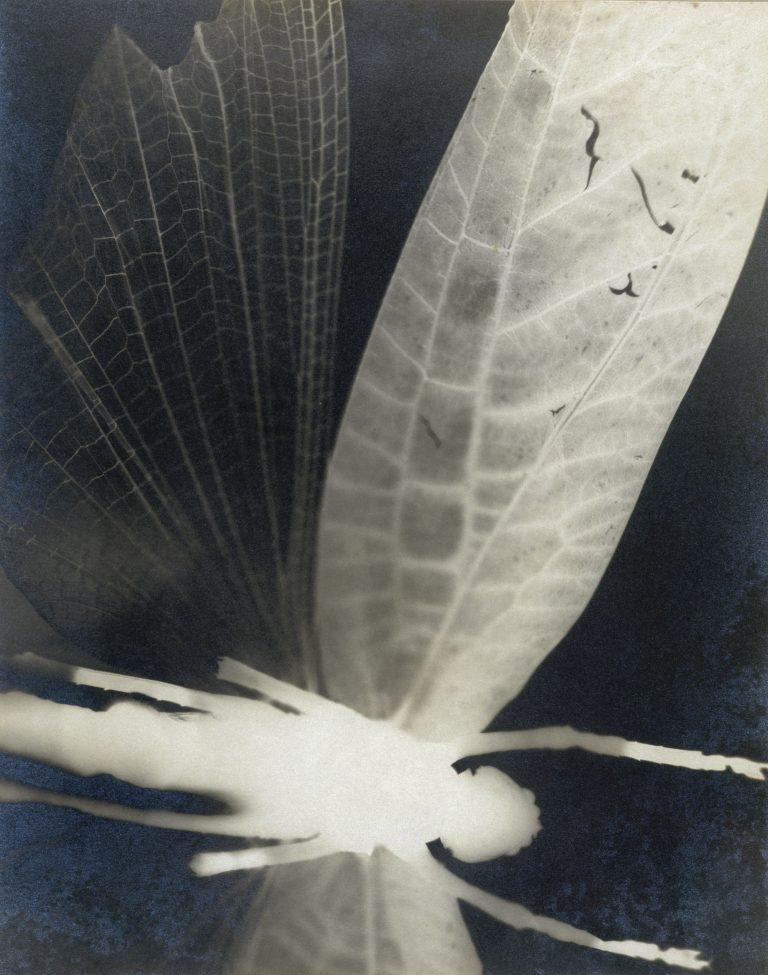柯蒂斯·莫法特 (Curtis Moffat) 的黑白抽象作品,大约 1925 年。蚱蜢,昆虫