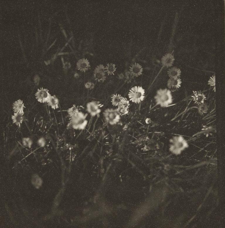 柯蒂斯·莫法特 (Curtis Moffat) 的黑白照片,雏菊,c。 1925 -30