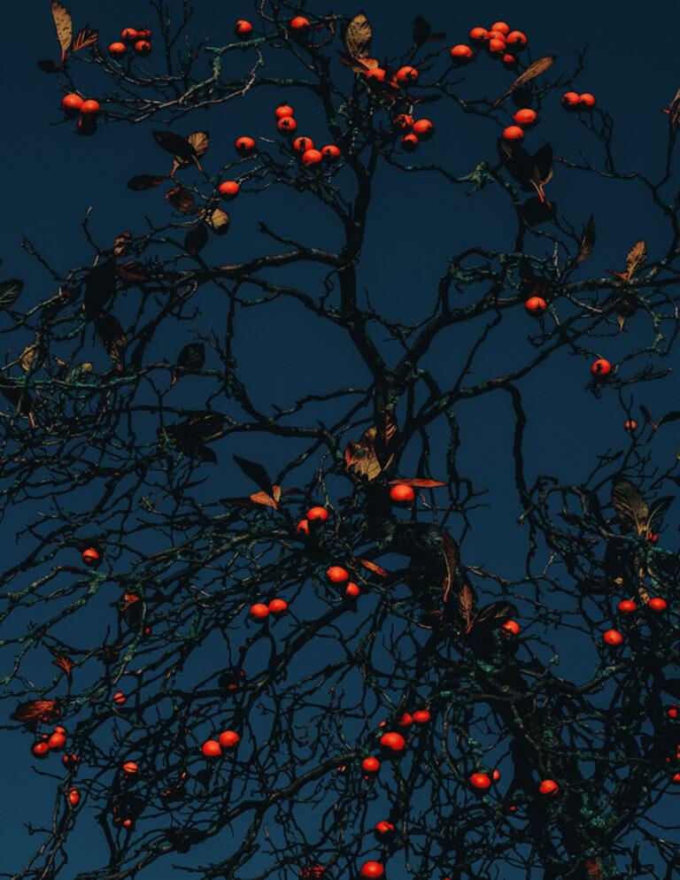 Farbfoto eines Baumes mit roten Früchten von Francesco Gioia