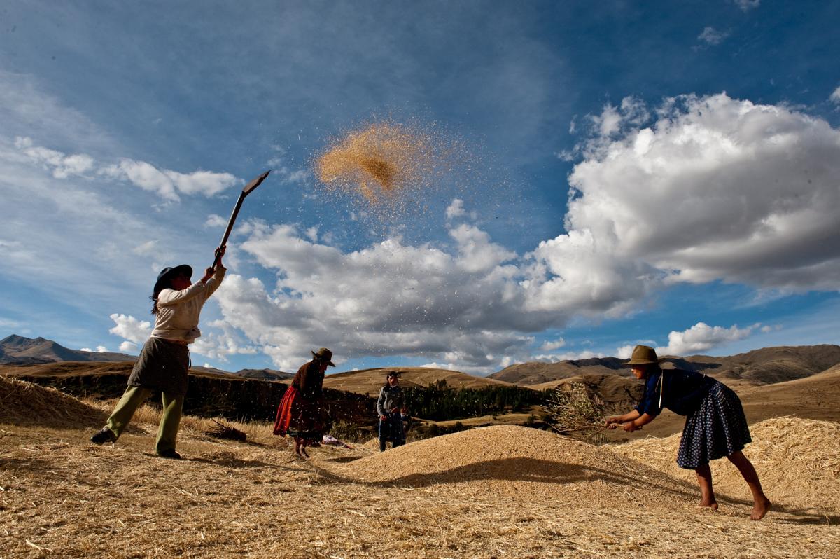 Farbfoto von Luis Fabini aus der Serie Harvest. Anden, Peru, Kartoffelernte, Ritual